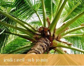 2018-04-05-reunion-palmiers-vignette