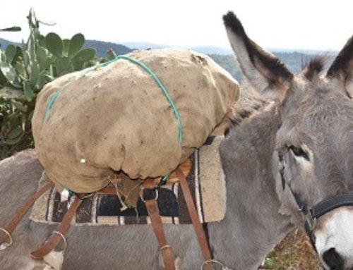 Ecologie | Des ânes pour évacuer les déchets