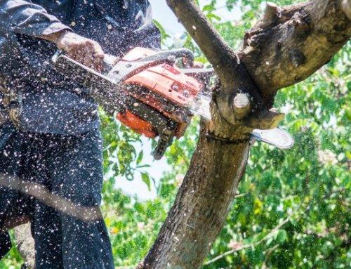 Travaux d'élagage et de taille des arbres du lundi 22 juillet au vendredi 2 août 2019