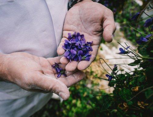 EXPO Des Violettes et des Hommes – Ellen Teurlings