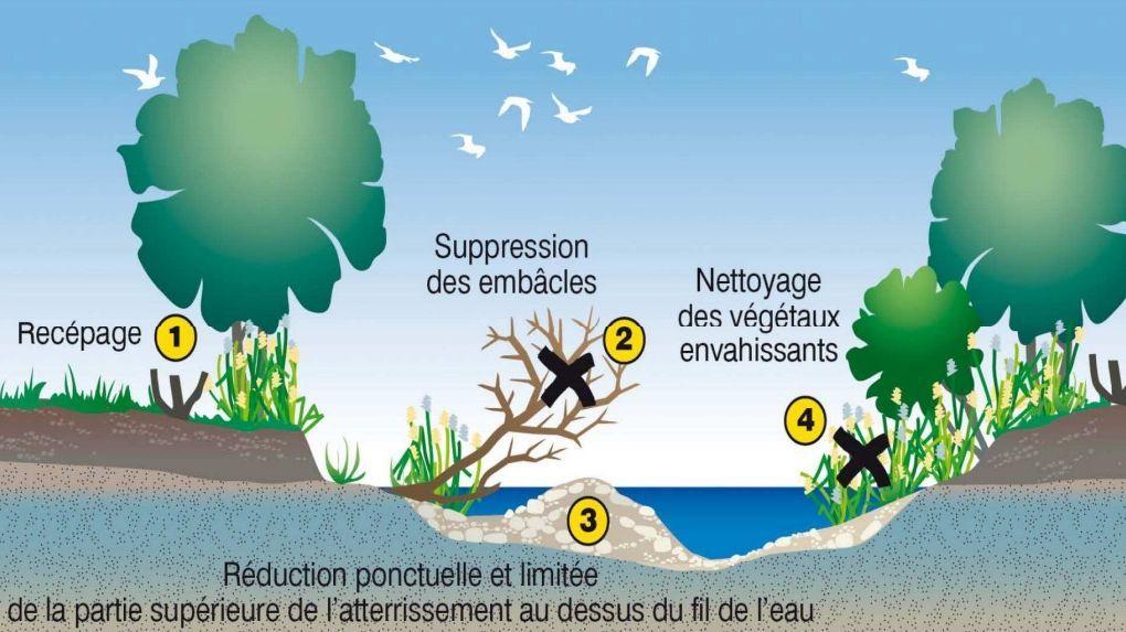 Entretien des vallons et des cours d'eau : une priorité